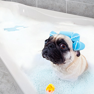 Sterling Bath Dog - Ad